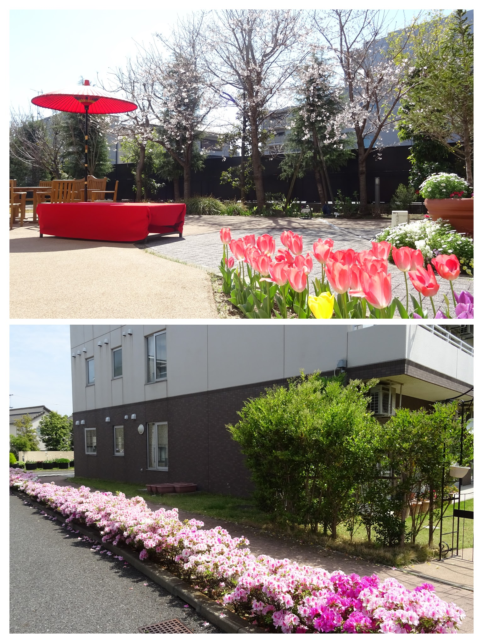 各ホームの取組み(もみの樹・横浜鶴見)四季の移ろいを感じる中庭